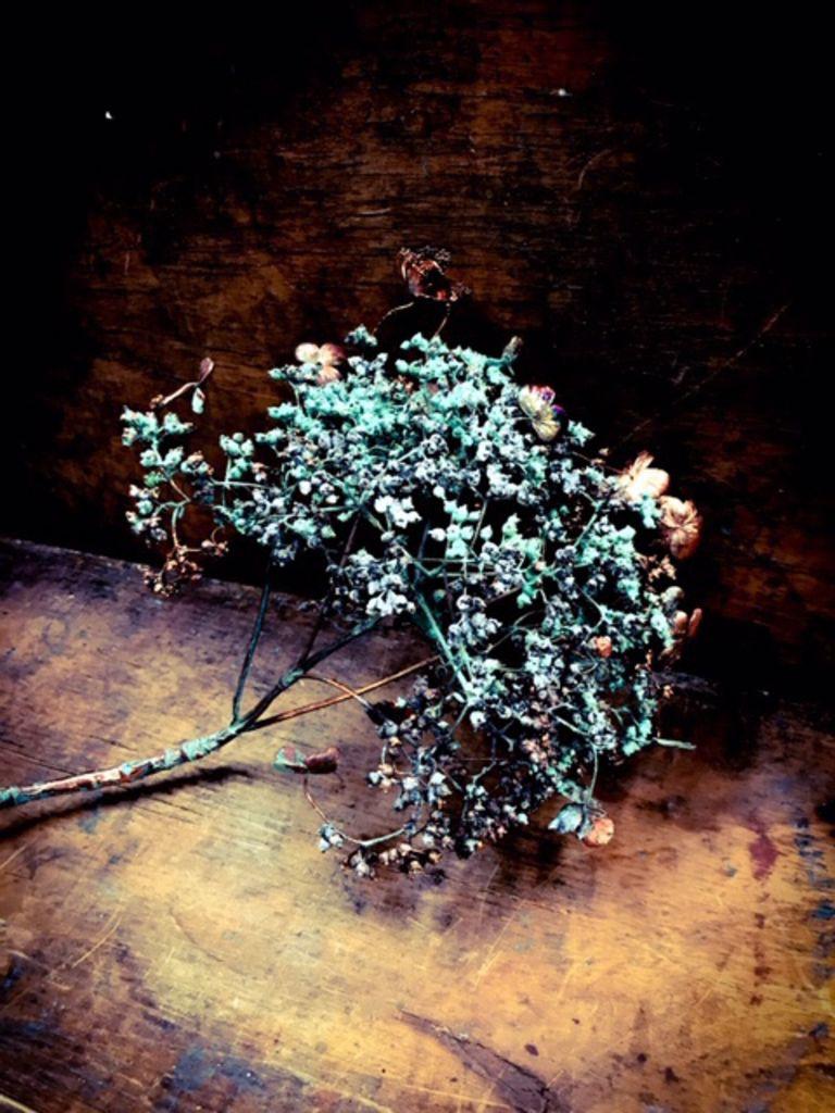 Image of   ARTbyKobber - Hortensia klatre / forkobret